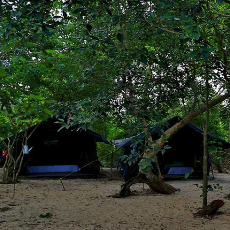 Tented Safari Camping in Sri Lanka
