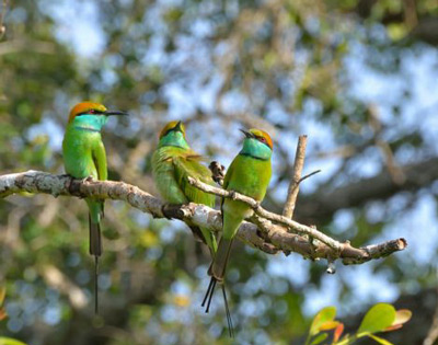 Bird Watching Tours in Sri Lanka Ceyline Travels