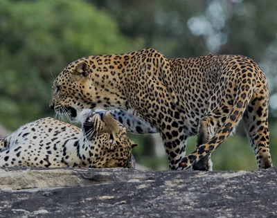 Wildlife Tours in Sri Lanka Ceyline Travels